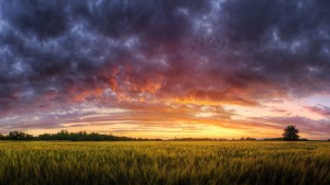 colorful-dusk-sky-above-the-field-14974