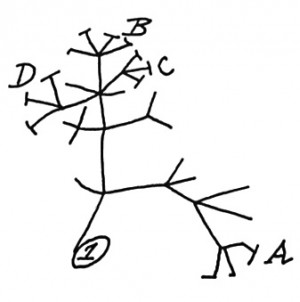 darwin_evolution_tree