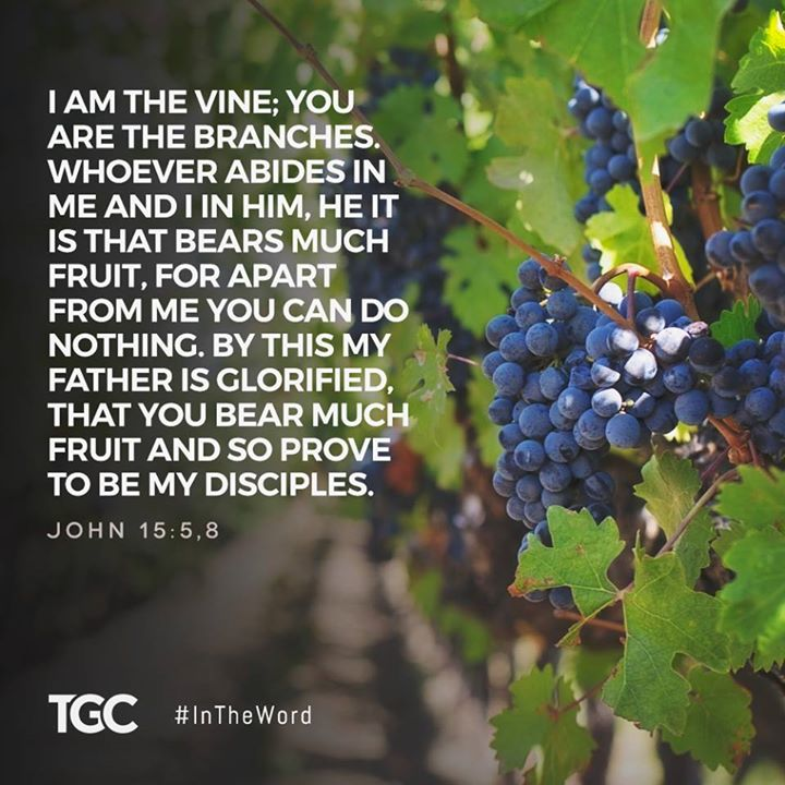 vine and verse