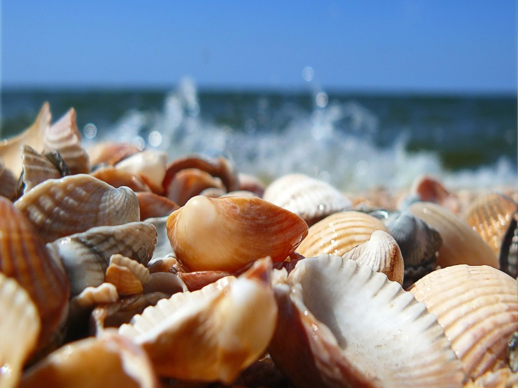 Seashells_on_the_Beach_Wallpaper_2sh5x.jpg (1024×768)
