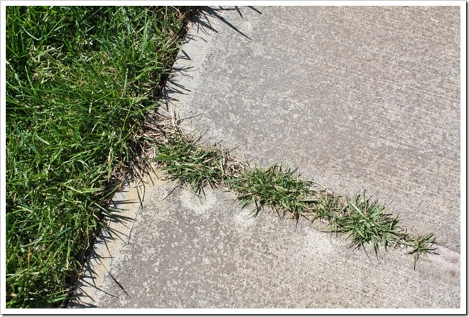 Grass-growing-on-sidewalk.-800x533_t