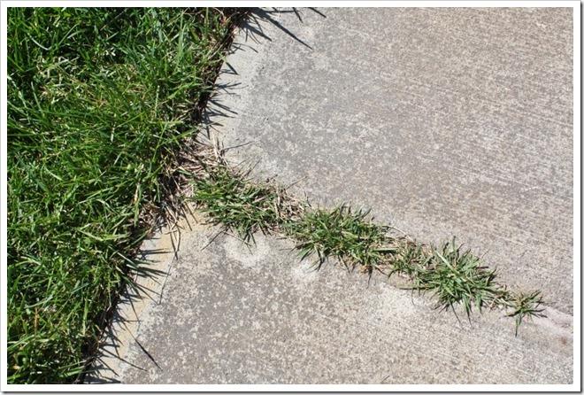 Grass-growing-on-sidewalk.-800x533_t