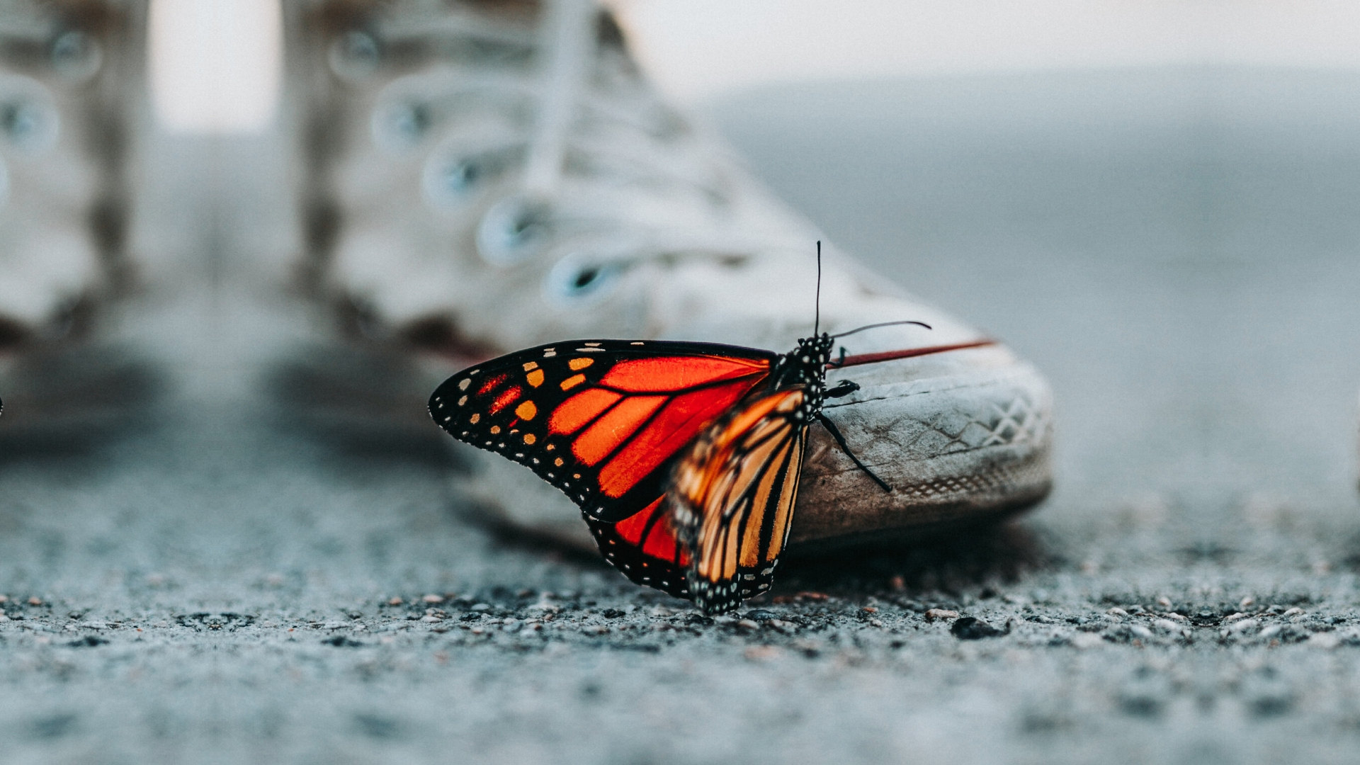 Restoring joy to our hearts - image of a bright orange butterfly on the tip of worn out converse sneakers on a grey, dusty backdrop