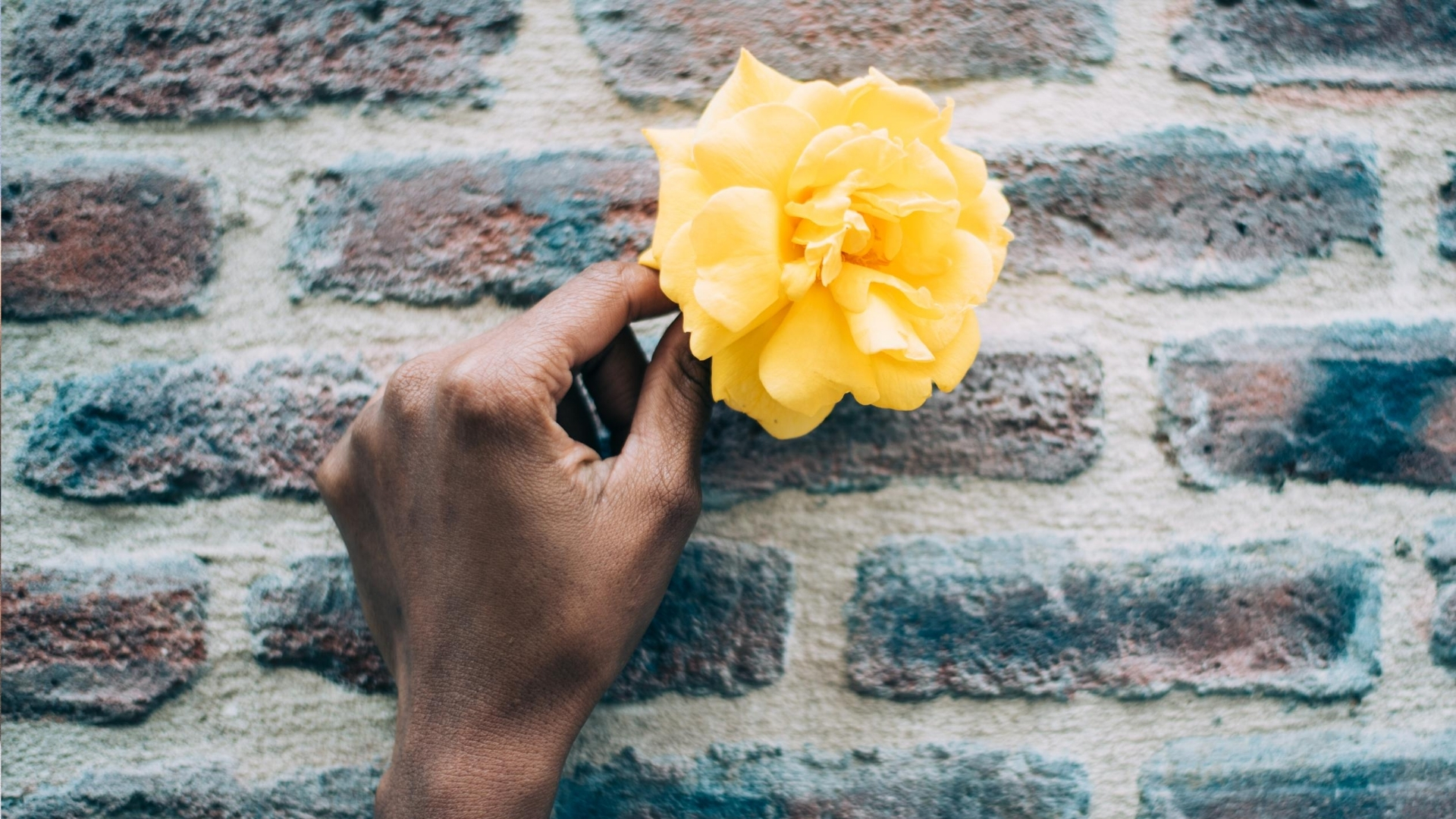 I asked God to take my life: Woman's hand holding a yellow rose against a brick wall