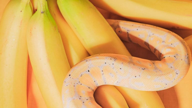 A yellow snake amongst bananas - how to spot a christian cult