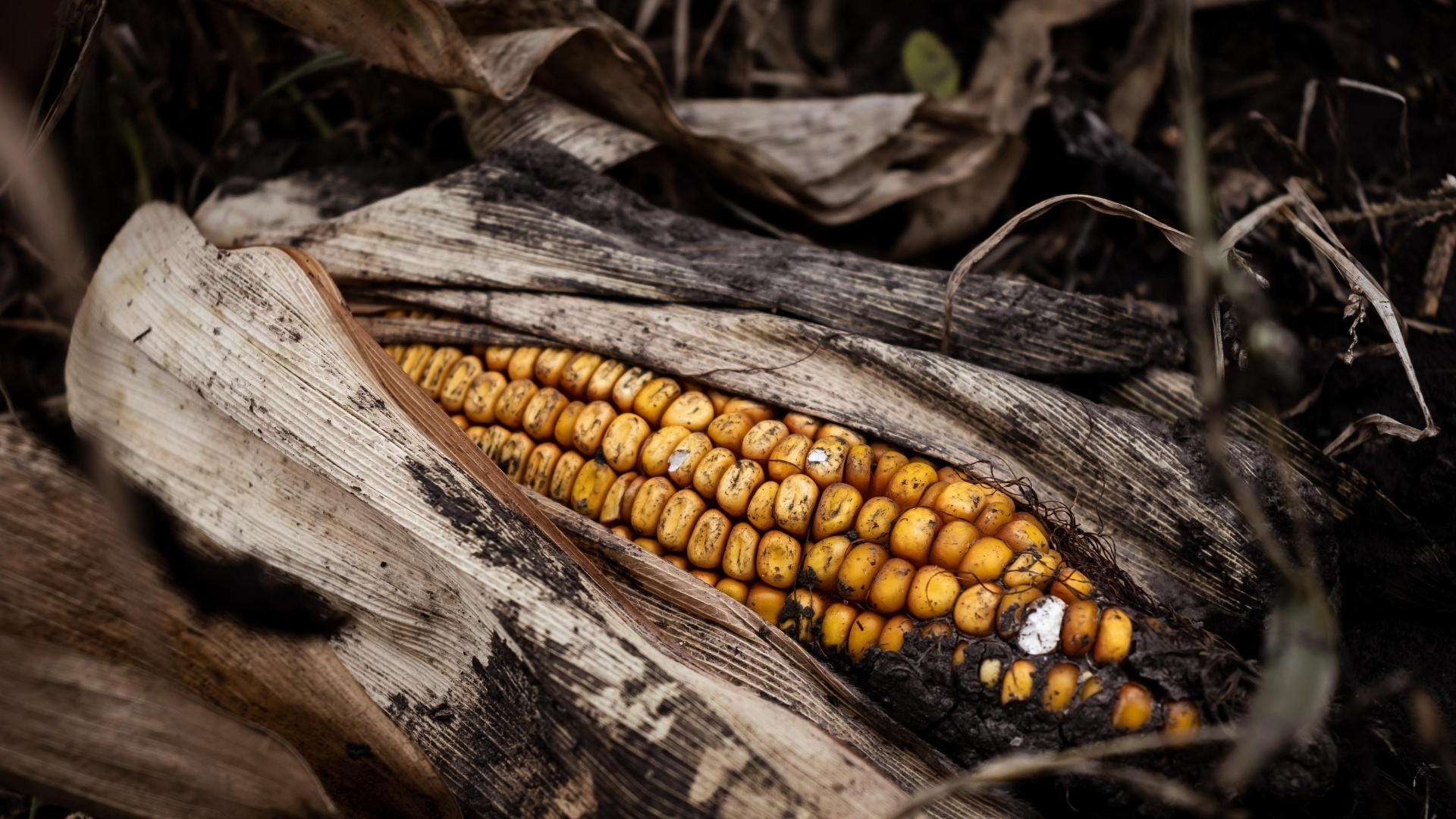 Corn lying in the dark dust - how do I help a loved one involved in a cult?