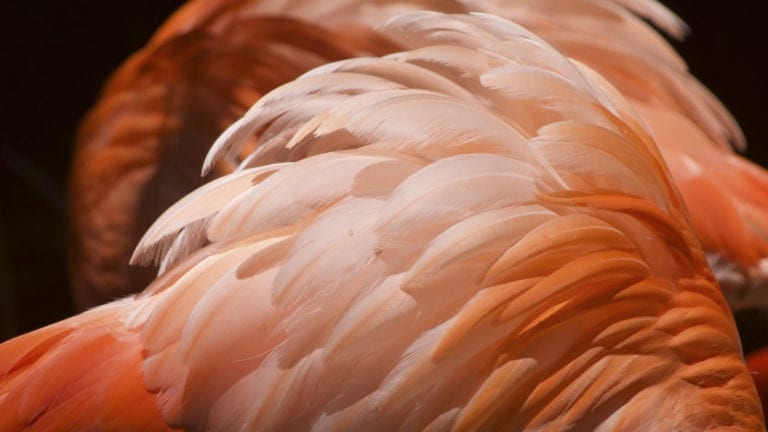 Birds of a different feather - views on angels and demons compared - pinky-brown feathers close-up