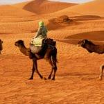 Pilgrim Politics - people on camels travelling through a desert