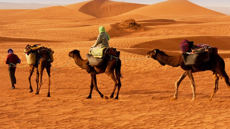 Pilgrim Politics - people on camels travelling through a desert